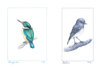 Fine-art-print-bird-sketches-Steve-Moase