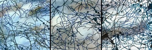 canvas-print-jenny-bennett-artist-1